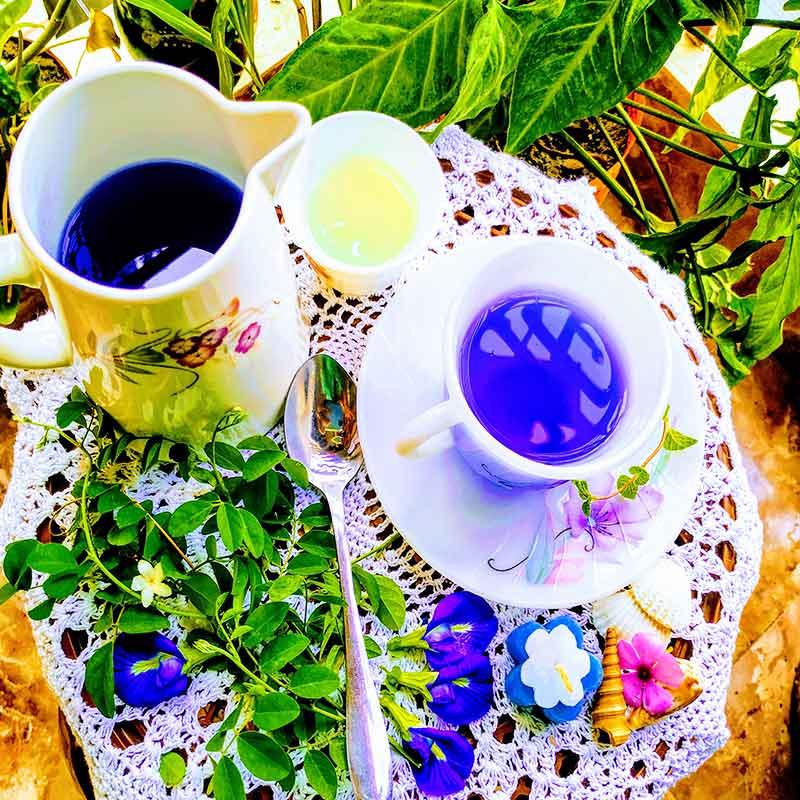 aporajita-tea অপরাজিতার চা @chuijhal.com